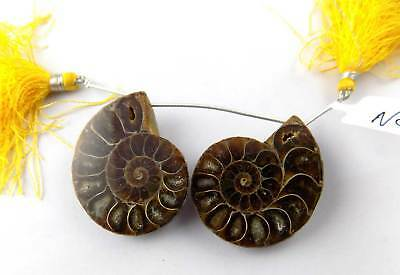 2 Pcs Natural Ammonite Snake Fossil Pair Slices Shells Uneven 42x34mm  For Sale