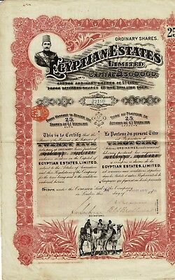 Egyptian Estates - London 1906 - Certificate of 25 shares - DEKO