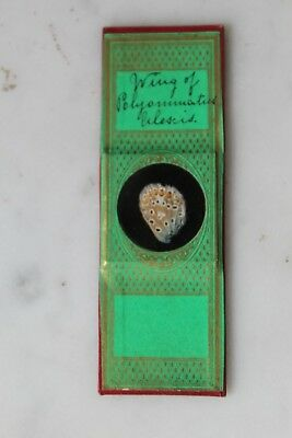 "FINE ANTIQUE VICTORIAN MICROSCOPE SLIDE ""Wing of Butterfly"" BY ""Greenpapaers"""