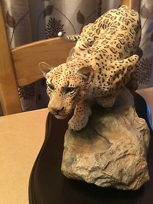 Superb Country Artists Leopard Untamed Spirit Pre Owned