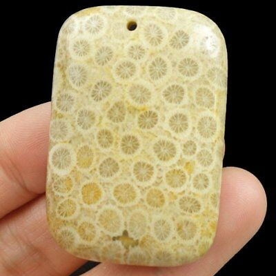 M45988 Nipomo Coral Fossil Oblong Pendant Bead 47x32x8mm