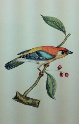 """10"""" x 7"""" Antique Bird Scene Matted Painting Old Leaf Paper 557"""
