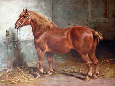c1900~Gorgeous Sorrel Chestnut Draft Work Horse in Barn~ NEW Large Note Cards