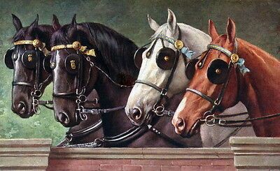 Antique Art~4 Harnessed Horse Profiles with Blinders & Ribbons~NEW Lg Note Cards