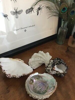 🐚 Selection Of Vintage Collectable Sea Ocean Shells Clam Conch Mother Of Pearl