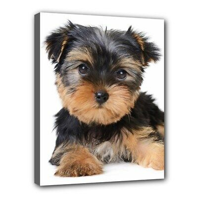 "YORKSHIRE TERRIER Dog Art Portrait Photography 11""x14"" CANVAS PRINT Wall Decor"