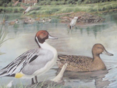 Knowles Bart Jerner Duck Plate First Issue - PINTAIL - EUC