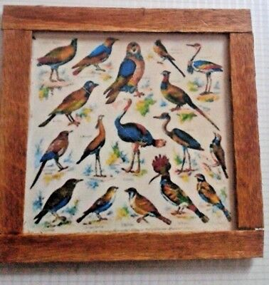 Dolls House  Bird collections  pictures