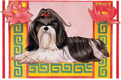 Shih Tzu Birthday Card