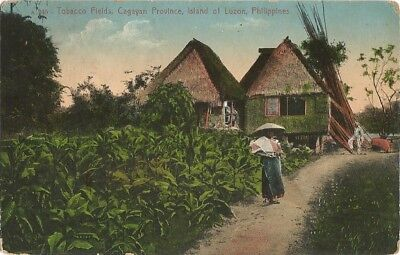 Luzon, Philippines 1914 Postcard, Tobacco Field, Cagayan Province