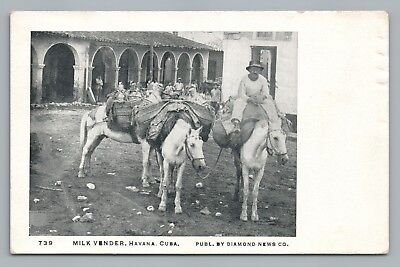 Milk Vender HAVANA Cuba—Rare Antique Occupation UDB Habana Horses 1910s