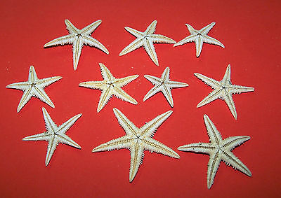Small (2 - 4cm) Natural Starfish - Craft Work, Embellishments, Displays etc.