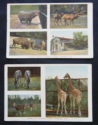 ZOOLOGICAL GARDENS GREETING!  2 Circa 1910  Uncirculated Post Cards  #9981