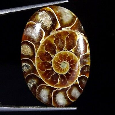 24.10Cts 100% Natural Designer Ammonite Fossil Oval Cabochon Loose Gemstone