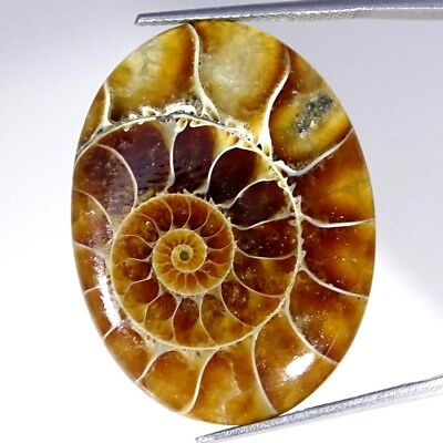 33.20Cts 100% Natural Designer Ammonite Fossil Oval Cabochon Loose Gemstone