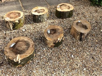 (48) Set Of 6 Giant Logs Slice Plinths Garden Feature Stool Stand Size D34cm H18