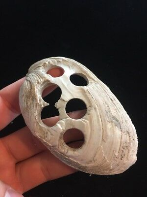 """4"""" Awesome 1890s Historic Shell Button Bead Blank Lagrange Missouri F6"""