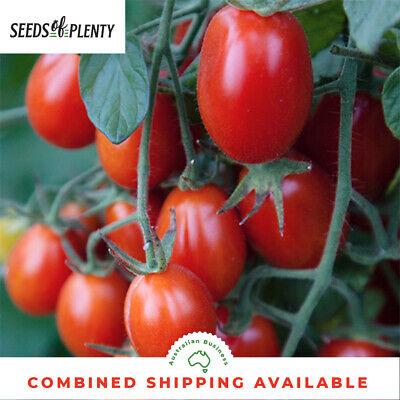 TOMATO - Principe Borghese (70 Seeds) Heirloom SUN DRYING VARIETY Bulk
