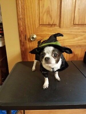 NWT Size small * 2-PIECE WITCH *  Dog Halloween Costume small