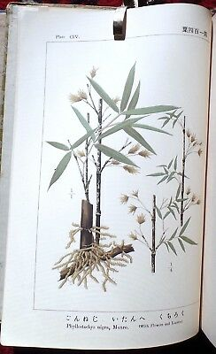 ILLUSTRATIONS of JAPANESE SPECIES BAMBOO by ISUKE TSUBOI,.109 Color Plates..1916