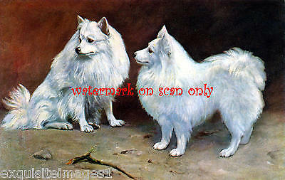 Antique Art~Two White Spitz Dogs ~ NEW Large Note Cards