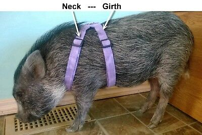 Handmade Mini Pig Harnesses - by Pig Gear
