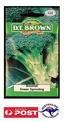 DT BROWN BROCCOLI 500 seeds  vegetable garden green sprout winter spring