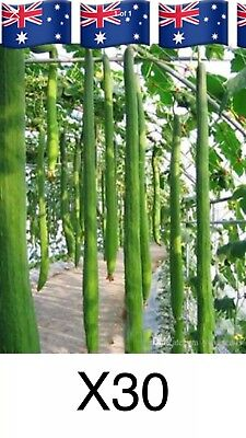 40x loofa luffa loofah seeds Vegetables Veggies Plants Garden Outdoor.