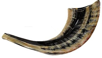 Kosher Natural Ram Horn Shofar size 25-30 c''m Made in Israel By Art  judaica
