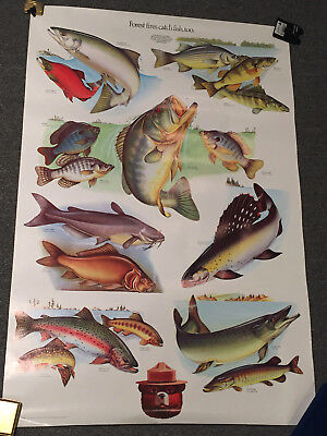Vintage Smokey The Bear Fish Poster Forest Fires