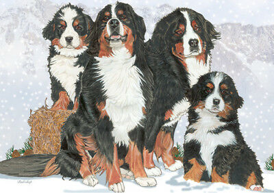 Bernese Mountain Dog Blank Note Cards Boxed