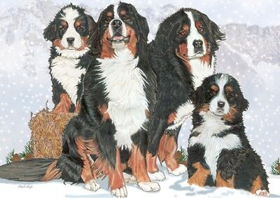 Bernese Mountain Dog Blank Note Card