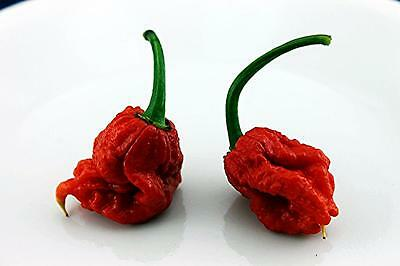 Carolina Reaper Chilli Pepper Seeds Hot HP22B 10+ Seeds Uk BUY 2 GET 1 FREE