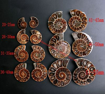 Awesome! Split Ammonite Fossil Shell Ammonite Fossil Pair Pendant Jewelry