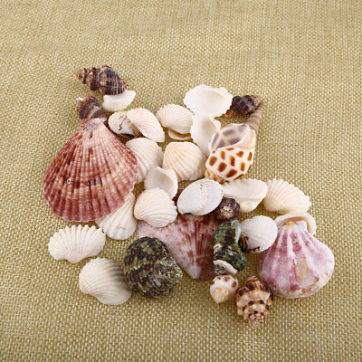 8E6A New 100g Beach Mixed SeaShells Mix Sea Craft SeaShells Aquarium Decor