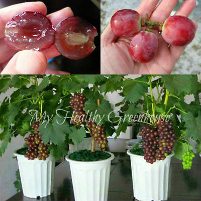 Fruit And Vegetables Seeds Many Varieties Plants Seeds Bonsai Grapes 50 Pcs