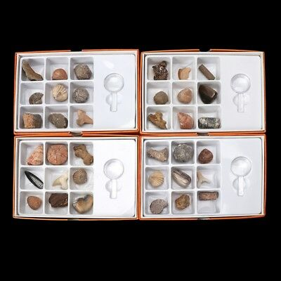 9Pcs Kids Genuine Fossils Collection Ammonite Rocks Display Jewelry Gift