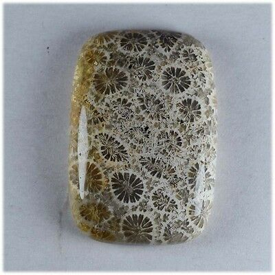 20.6 Ct Natural Amazing Designe Fossil Coral Rectangle Cabochon Loose Gemstone