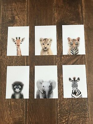 A4 Baby Safari Animal Photographs  Nursery Gift Room Wall Art Decor Pictures