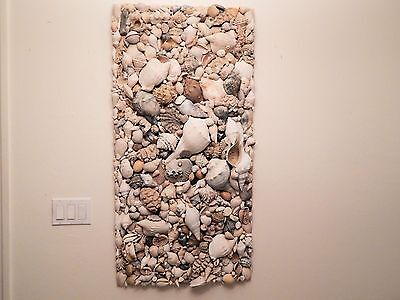 HUGE COLLAGE OF ANCIENT FLORIDA FOSSIL SEASHELLS  2' By 4' - ONE OF A KIND!!