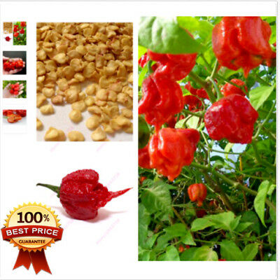 Ghost Pepper Carolina Reaper Trinidad Moruga Scorpion Chili Mixed Seeds Pt 200x