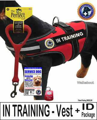 "IN TRAINING - DOG Vest + ID + Perfect Leash + Dog Tag  ""Walkabout"""
