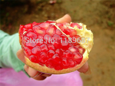 Pomegranate  Home Home Delicious Fruit For Seeds Bonsai Seeds Tree Plant 30 Seed
