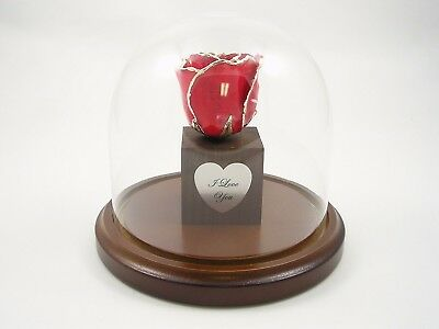 Enchanted Silver Dipped Rose Red Bloom Anniversary Gift