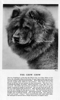 The CHOW CHOW Red DOG Rare Vintage Art Photo & Breed Description  1931