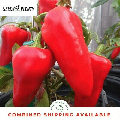 CAPSICUM - Romanian Sweet (50 Seeds) HIGH YIELDING VARIETY Heirloom
