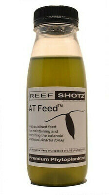 Live AT Feed for Acartia tonsa copepods