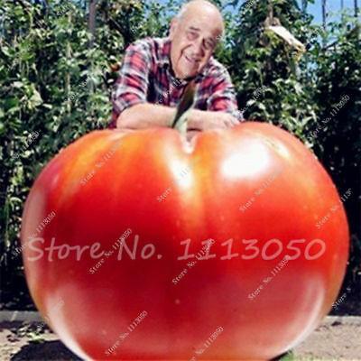 Tomato Tasty Seeds, Giant And Exotic Fruit Seeds,organic Vegetable 100 Pcs Rare