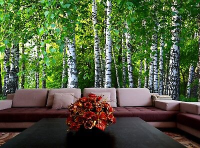 Birches Forest  Photo Wallpaper Wall Mural DECOR Paper Poster Free Paste