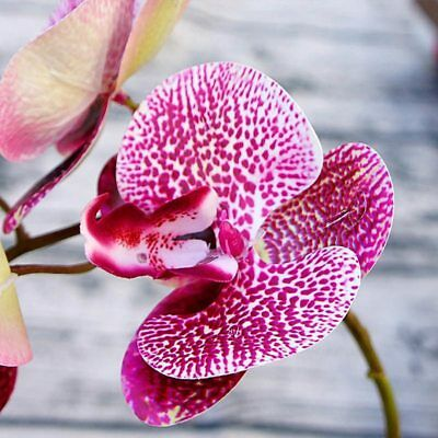 6 heads Simulation 3D Phalaenopsis silk orchid christmas decoration for new year
